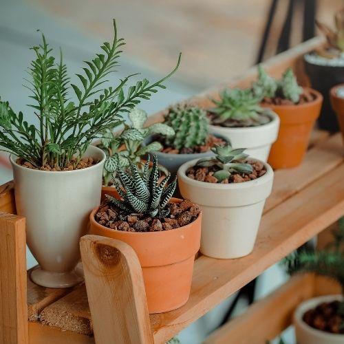 Mało wymagające rośliny do domu